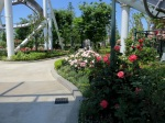 A pretty park filled with roses.